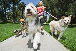 Dog-Walk-Etiquette-Part-One-What-to-Do-2