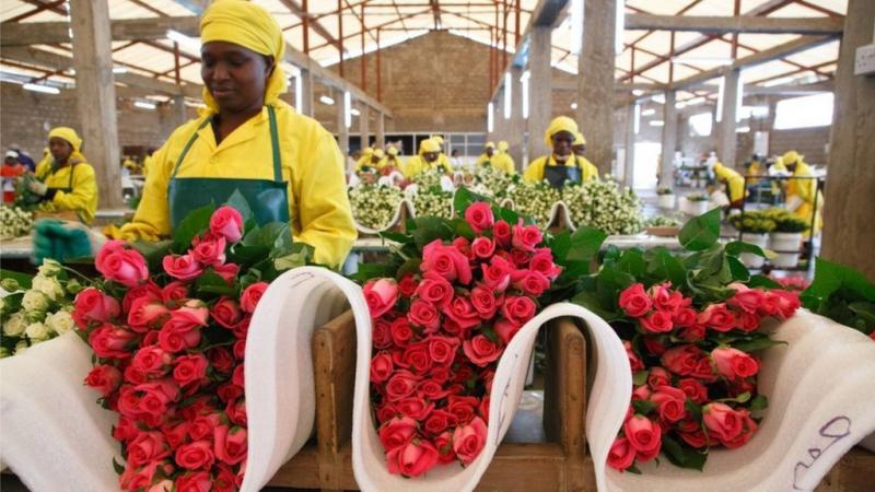 Kenyan flower pickers fighting sexual harassment