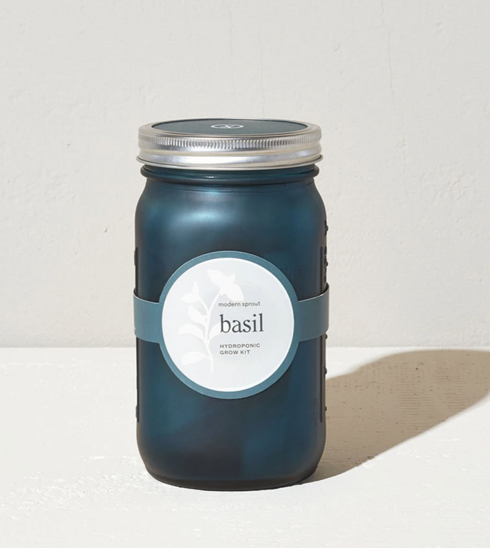 Modern Sprout Basil Garden Jar