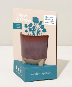 Glow and Grow Kit - with Daisy Seeds