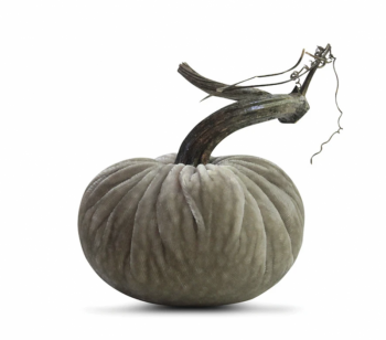 Velvet Plush Pumpkin - Putty