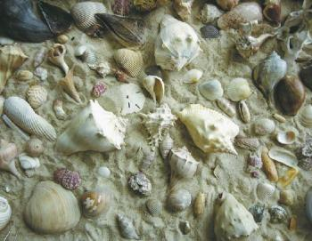 She Sells Sea Shells  550 Pc. Jigsaw Puzzle