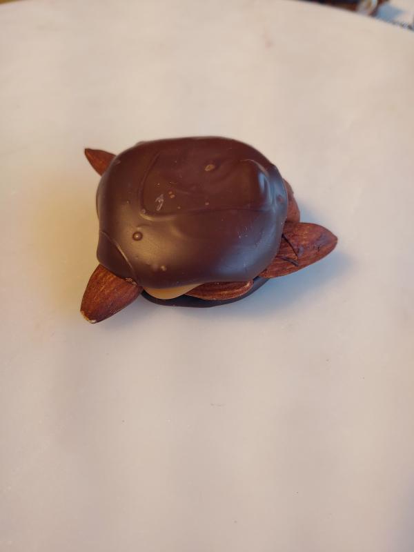 Dark Almond Turtle