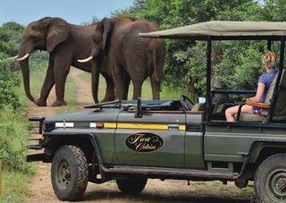 Safari.LR.Elephants